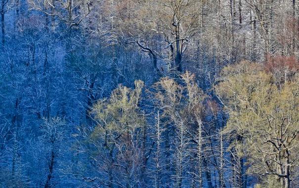 Фото обои лес, деревья, краски, США, Great Smoky Mountains National Park, Newfound Gap