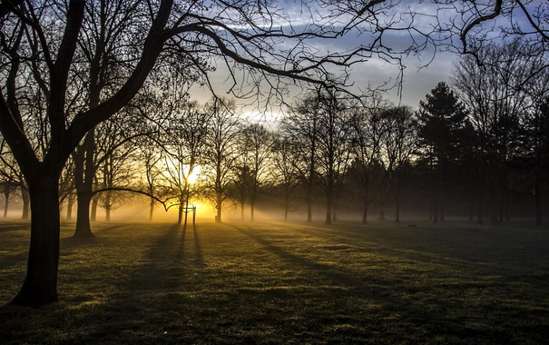 Фото обои свет, туман, утро