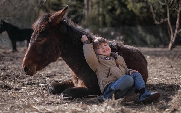 Фото обои фон, мальчик, пони