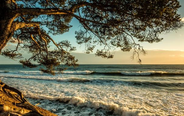 Фото обои море, волны, облака, закат, ветки, дерево, берег