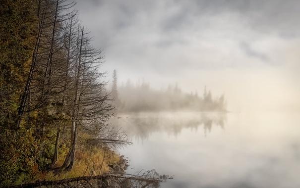 Фото обои лес, туман, озеро