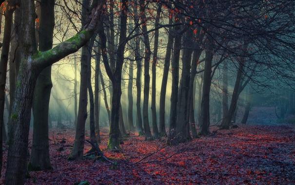 Фото обои листья, деревья, природа