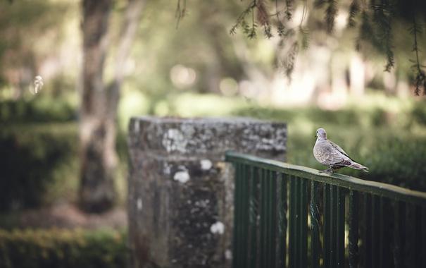 Фото обои город, птица, забор