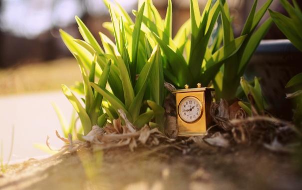 Фото обои трава, листья, время, часы, растения, циферблат
