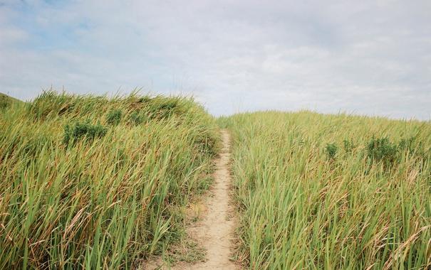 Фото обои небо, трава, голубое, дорожка, тропинка