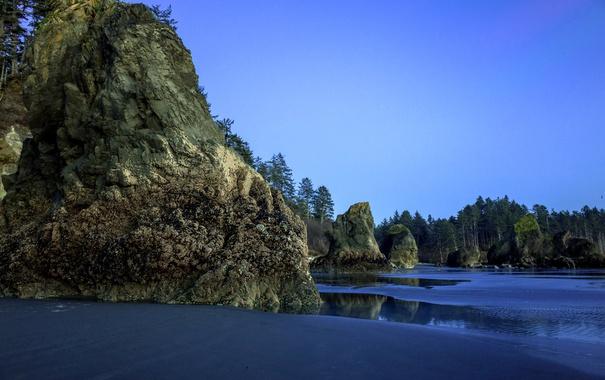 Фото обои песок, пляж, деревья, камни, скалы, вечер, Вашингтон