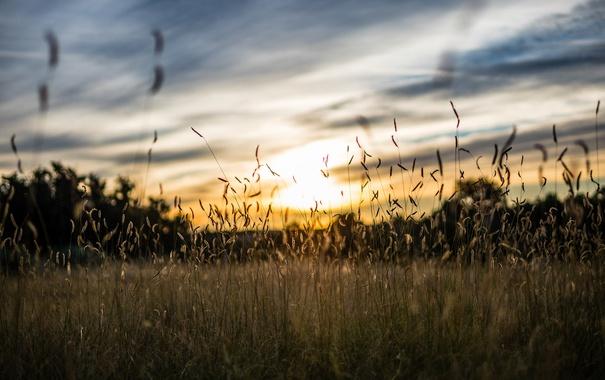 Фото обои поле, трава, утро