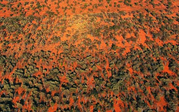 Фото обои деревья, краски, Австралия, Квинсленд