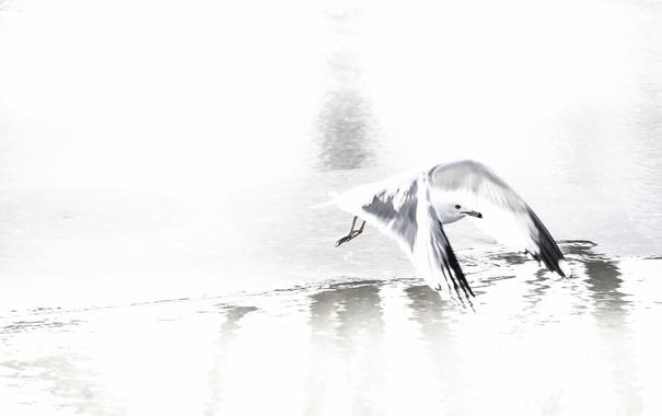 Фото обои природа, птица, полёт