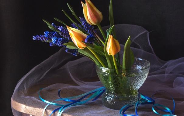 Фото обои лента, тюльпаны, мускари
