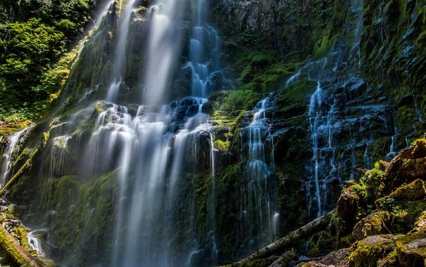 Фото обои листья, деревья, природа, водопад, мох, красиво