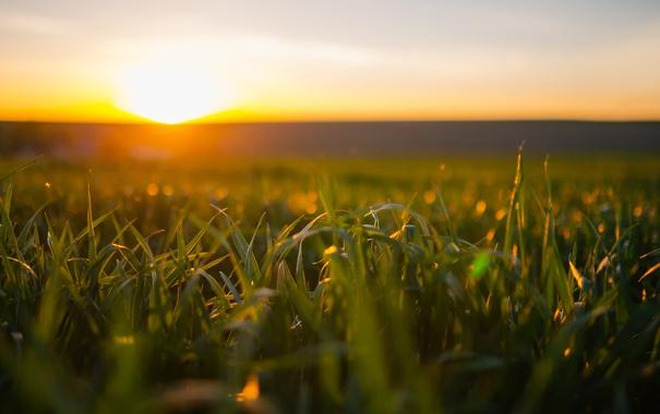 Фото обои поле, свет, утро