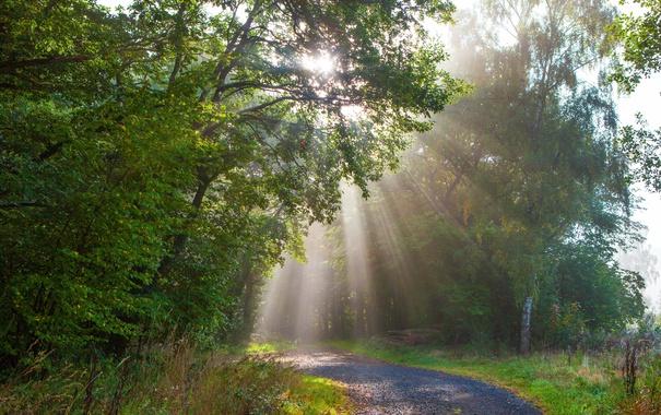 Фото обои лес, деревья, парк, Германия, лучи солнца, тропинка, Monreal