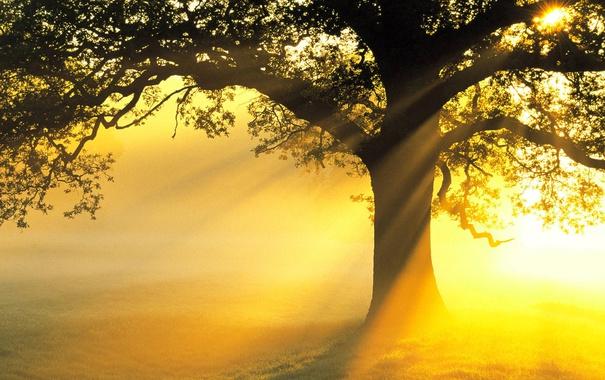 Фото обои лучи, свет, дерево