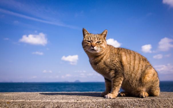 Фото обои небо, кот, взгляд, фон