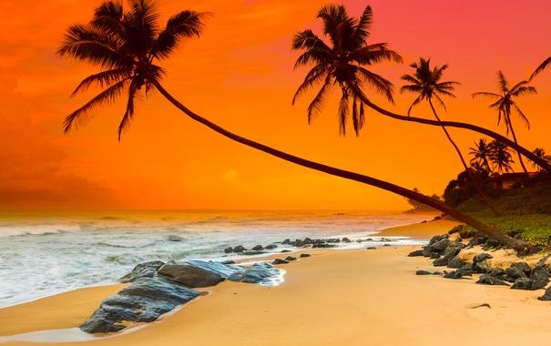 Фото обои песок, море, пляж, закат, пальмы, берег, beach