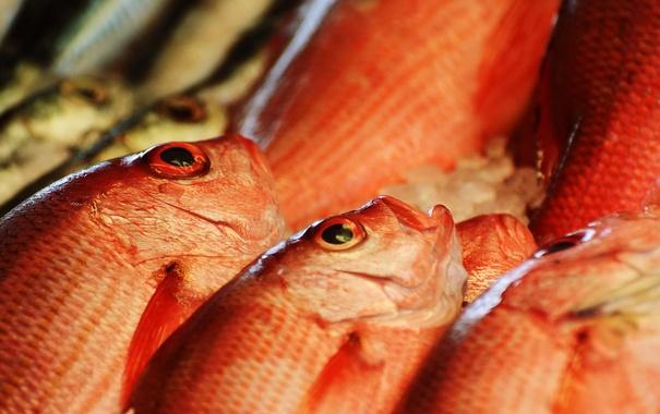 Фото обои макро, фон, рыба