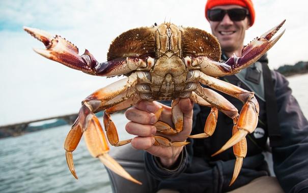 Фото обои catch, crab, tweezers