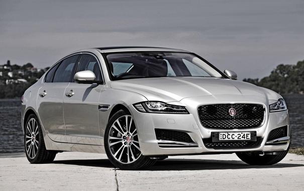Фото обои белый, Jaguar, ягуар