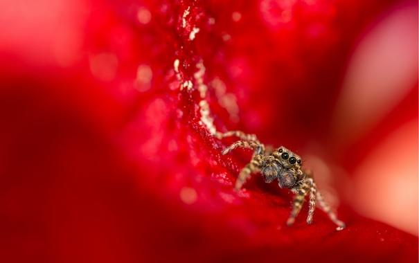 Фото обои природа, фон, паук