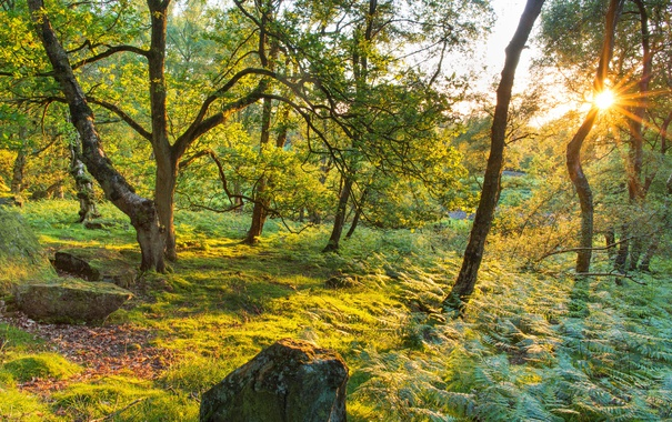 Фото обои камни, Stanton Moor, трава, лучи солнца, лес, папоротник, зелень