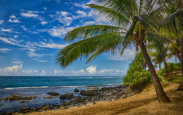Фото обои море, тропики, пальма, океан, берег