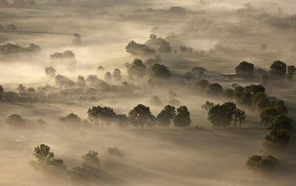 Фото обои деревья, туман, Франция, Центральный массив