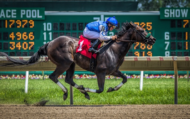 Фото обои конь, гонка, спорт