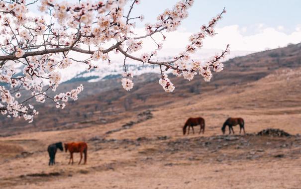 Фото обои поле, пейзаж, цветы, природа, кони