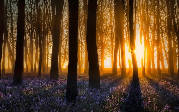 Фото обои лес, свет, цветы