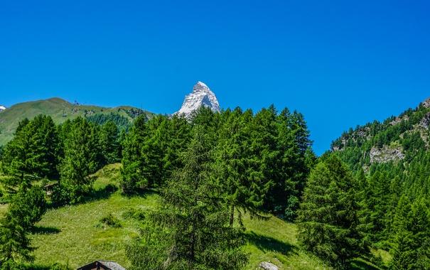 Фото обои зелень, лето, небо, солнце, деревья, горы, голубое