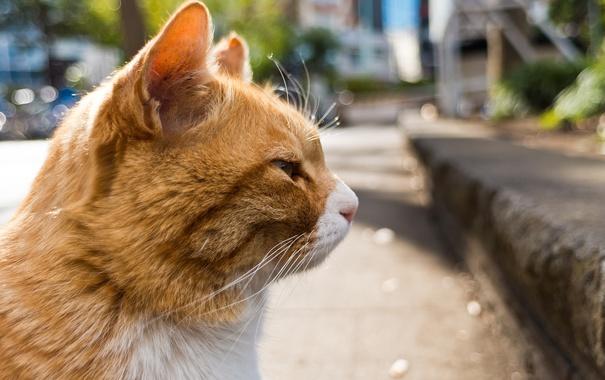 Фото обои кот, усы, фон, профиль