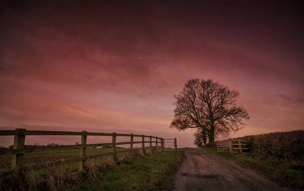 Фото обои дорога, ночь, забор