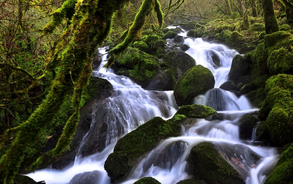 Фото обои зелень, лес, ручей, камни, течение, мох, Швейцария