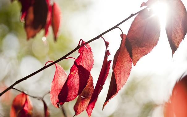 Фото обои листья, свет, природа