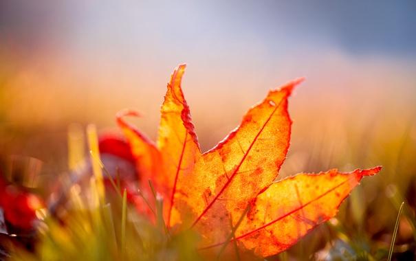 Фото обои оранжевый, лист, листок