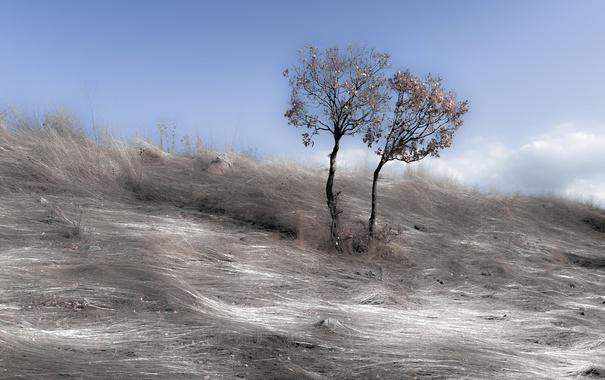 Фото обои небо, дерево, серебренные волны