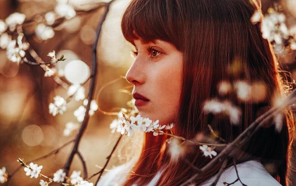 Фото обои глаза, взгляд, девушка, ветки, лицо, волосы, весна
