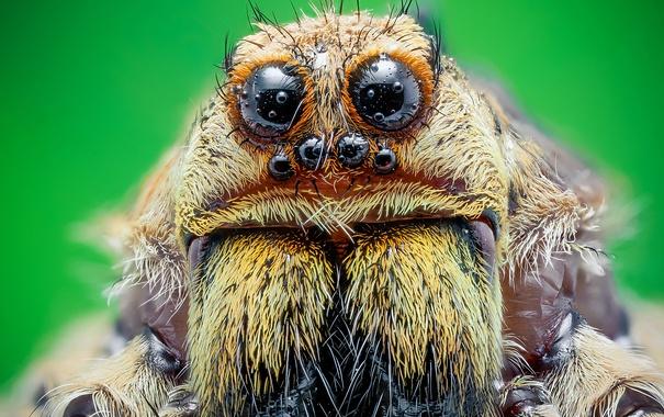 Фото обои eyes, hair, spider burns