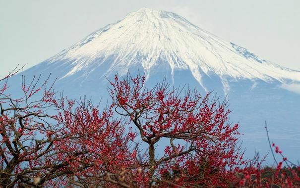 Фото обои небо, деревья, гора, вулкан, Япония, панорама, Fuji