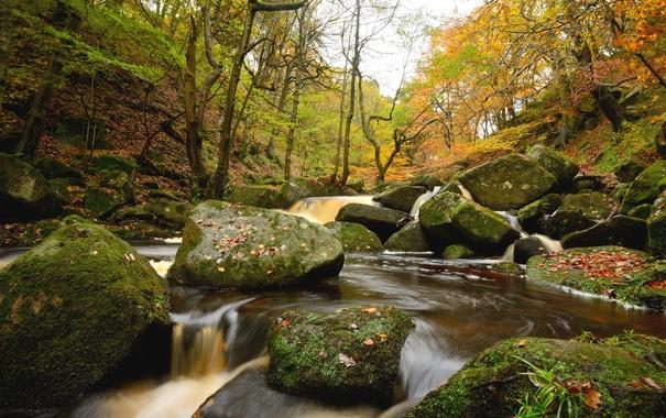 Фото обои лес, вода, деревья, река, камни