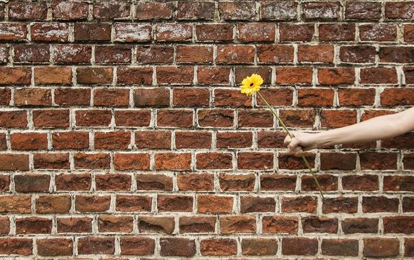 Фото обои цветок, стена, рука
