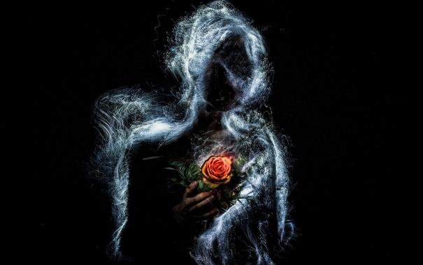 Фото обои фон, роза, силуэт