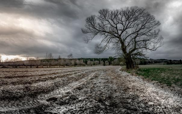 Фото обои поле, природа, дерево