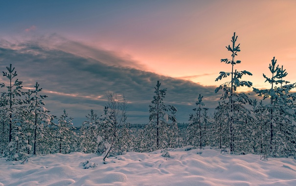 Фото обои зима, снег, деревья, закат