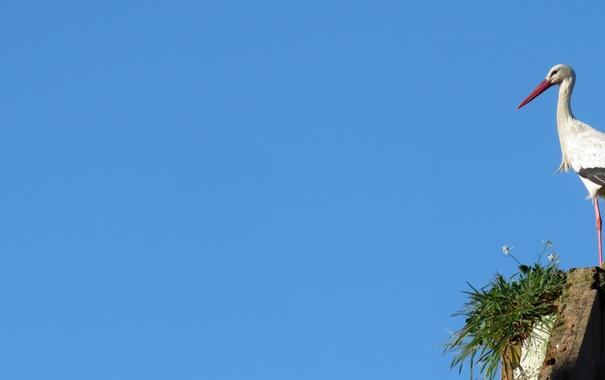 Фото обои небо, птица, аист