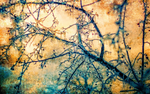 Фото обои дерево, цвет, лёд