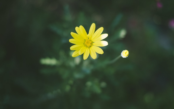 Фото обои цветок, желтые, лепестки