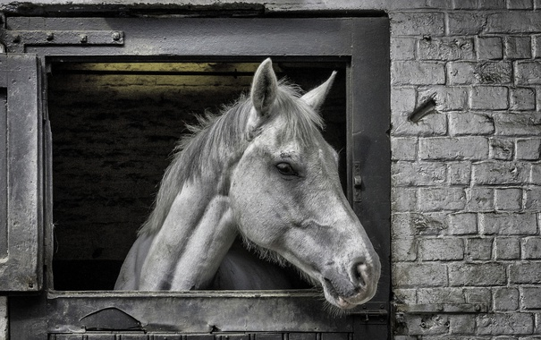 Фото обои конь, морда, фон