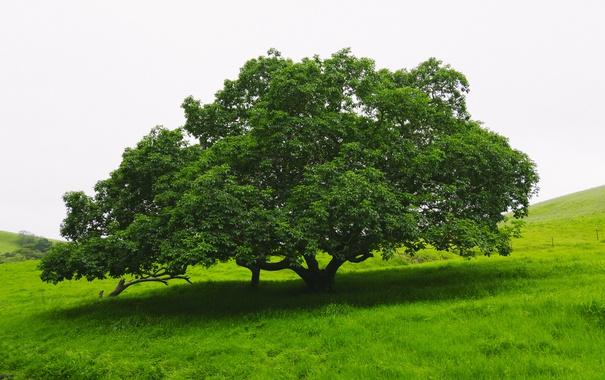 Фото обои зелень, лето, природа, Дерево